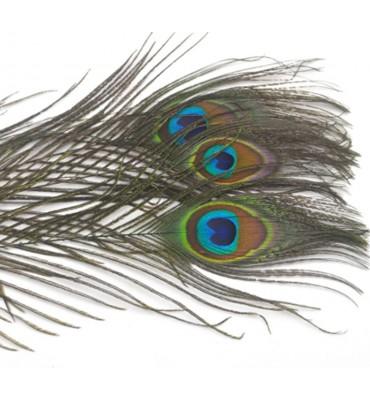 Pluma de Pavo Real Ojos 6/8'' - 3 unid